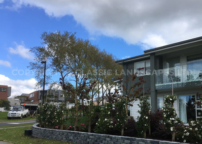 Timber Retaining Walls Auckland Timber Fencing Ideas